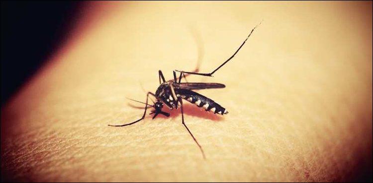 سندھ میں ڈینگی کے کیسز آنے کا سلسلہ جاری، مزید 183 افراد بخار میں مبتلا